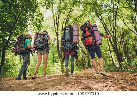 Low Angle Rear View Of Four Tourists, Walking In Autumn Forest, Wearing Comfortable Outfits For Hiki