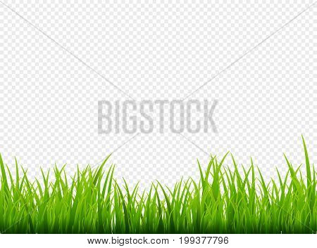 Green grass meadow border vector pattern. Spring or summer plant field lawn. Grass background.