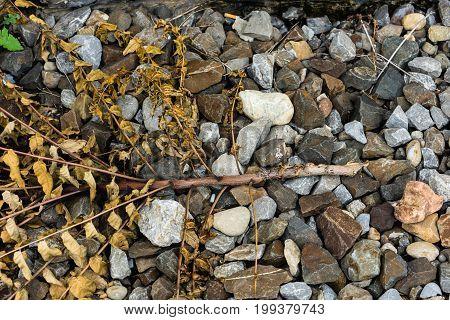 colourful peeble stone background whitered bush close up
