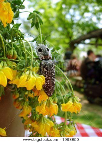 Bug On Yellow Flowers