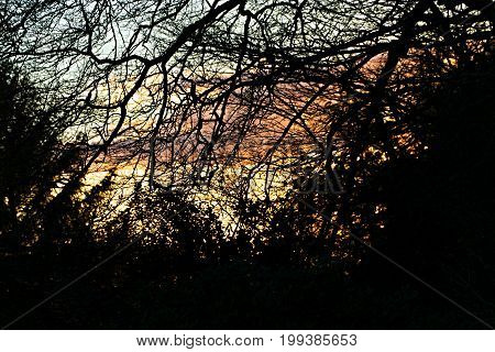 Bright Sunset through winter trees in UK