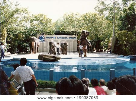 SINGAPORE / CIRCA 1990: The Animal Show at the Singapore Zoological Gardens features performances of Asiatic elephants (Elephas maximus).
