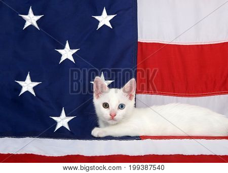 Small white tabby kitten with heterochromia eyes laying on an American Flag looking directly at viewer. Stars and stripes forever. Patriotic kitten