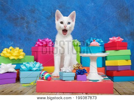 Small white kitten with heterochromia eyes sitting next to a miniature birthday cupcake on pedestal surrounded by colorful birthday presents looking at viewer with mouth wide open as if surprised