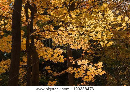 Golden autumn in Humber River park Toronto Ontario Canada