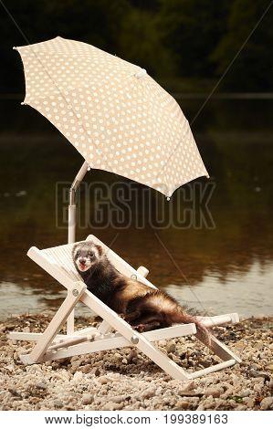 Ferret on beach enjoying relaxation on beach chair with umbrella