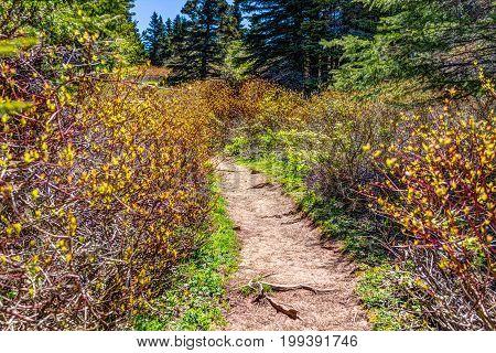 Trail hiking in Bonaventure island by Perce Quebec in Gaspe Gaspesie region