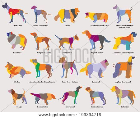 Vector set of colorful mosaic isolated different breeds dogs silhouettes on grey backround. Part 2