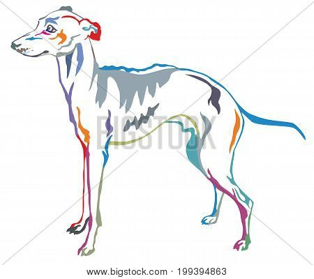 Colorful decorative portrait of standing in profile Italian Greyhound vector isolated illustration on white background