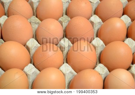 Brown chicken eggs lie in the tray.
