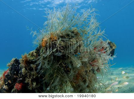 Hydroids in Shallow Water