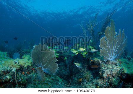 Coral Ledge