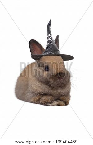 Little rabbit wearing black witch hat for Halloween night on white background.