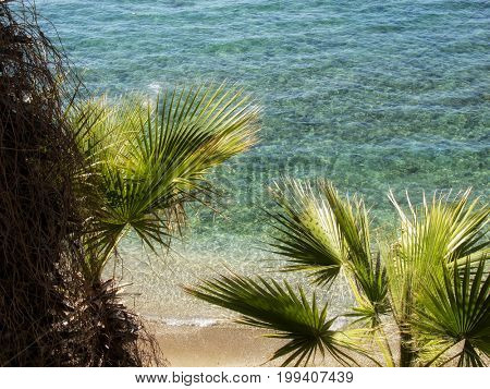 elevated view of Mediterranean seascape with palm tree and clear blue water