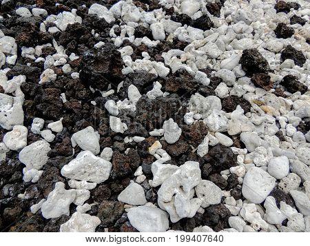 White coral on lava rock beach close-up macro on coast of Maui near Kihei in Ahihi-Kinau Natural Area Reserve Hawaii USA