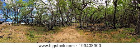 Panorama of hiking path through Ruins of ancient village Maonakala Village Complex, Kualapa Cluster and Kauhuoaiakini and Halua Pool Complex, on coast of Maui near Kihei in Ahihi-Kinau Natural Area Reserve Hawaii