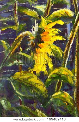 sunflowers. Original oil painting of sunflower flowers. beautiful sunflowers flowers on canvas. Modern Impressionism