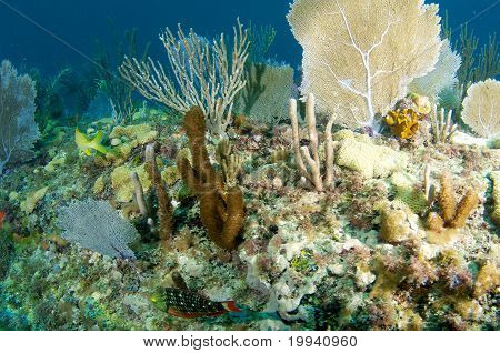 Complexity of a coral ledge