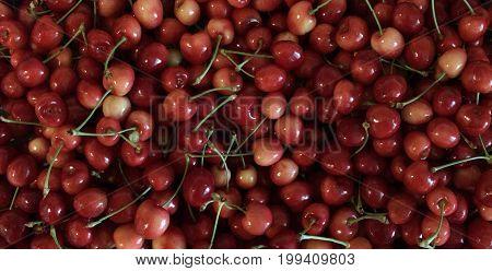 Rainier Cherries, 100% Organic, picked fresh washed ready to eat. Fruit background.