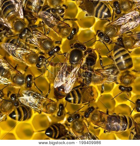 Queen Bee is always surrounded by working bees - her servant.