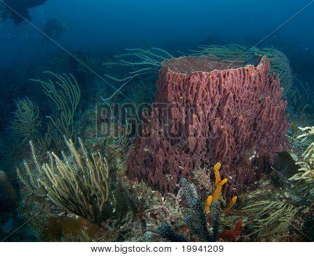 Large Barrel Sponge