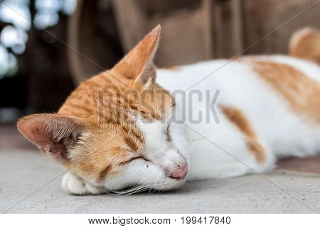 Close Up Of Cute Baby Cat Sleeping In A Tropical Wooden Cafe. Paradise Island Of Bali, Indonesia.