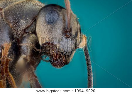 Detail of head of ant on green background macro or micro photography