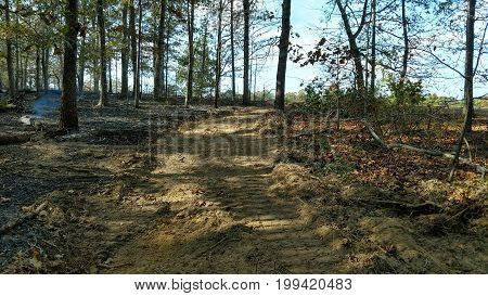 View down fire break through trees created with bulldozer