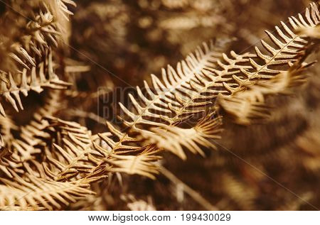 Closeup of a leaf of faded brownish fern.