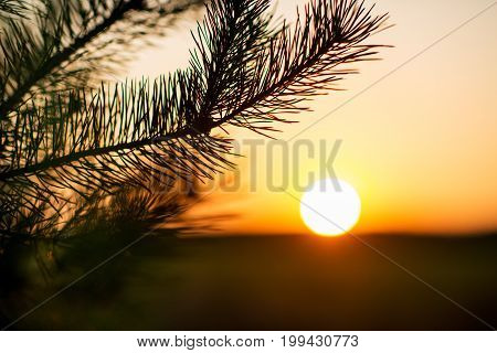 beautiful autumn sunset and tree branches in field