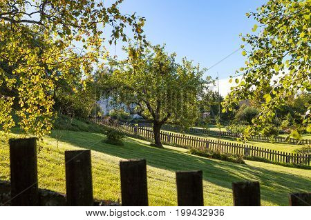 Green backyard area with trees and grass and wooden fence at the foreground