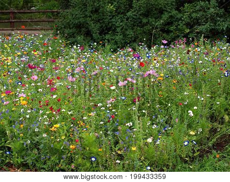 Meadow flowers summer colors nature poppy flora bee pasture