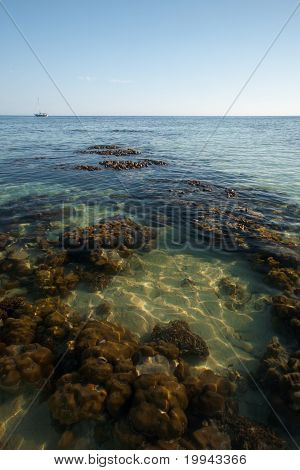 Coral reef at low tide is seen through crystal clear ocean water poster