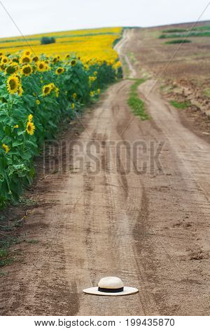 vertical view of white wicker hat on a brown dirt road near a field of sunflowers