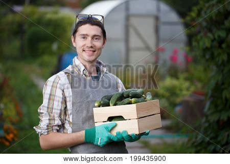 Brunet in gloves with box of cucumbers in garden at afternoon