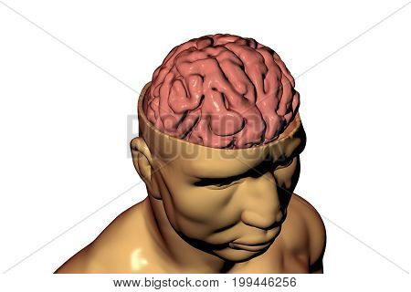 Human brain inside head isolated on white background, 3D illustration