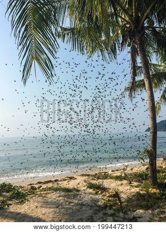 Roy Flies On The Beach Of Koh Chang Island