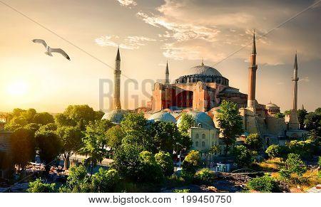 Bird and Hagia Sophia at sunset in Istanbul, Turkey