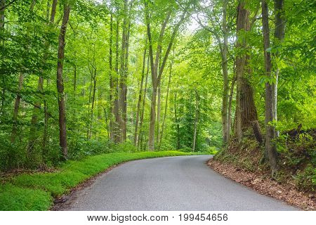 Deep green woods as the road winds through Susquehanna State Park in Maryland.