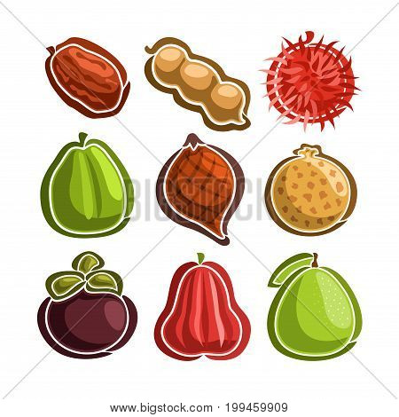 Vector Set icons of colorful exotic Fruits: 9 primitive logo of thai fruits isolated on white background, set of cartoon simple stickers for juice or candy, image of abstract fruit graphic pictograms
