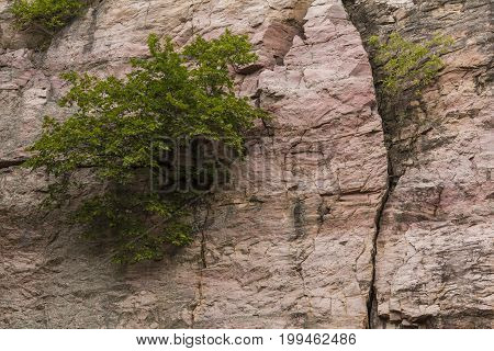 Tree In Cliff - A tree in the side of a cliff.