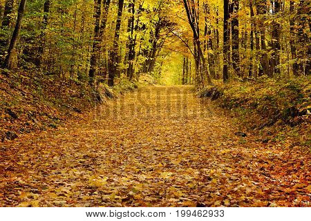 Inviting path through the woods covered in beautifull coloured autumn leaves from the surrounding maple trees