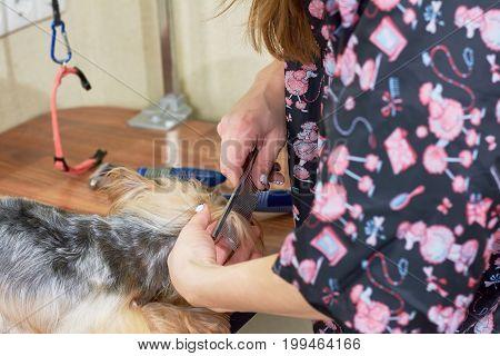 Hands of woman combing dog. Work of dog groomer macro.