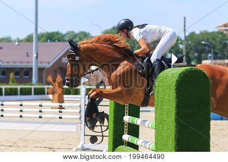 TAGANROG ROSTOV-ON-DON REGION AUGUST 6 2017: Competitions in equestrian sport devoted to the Day of Liberation of the Neklinovskiy district. Young horsewoman in a white suit on sorrel horse jumps over the green obstacle close-up