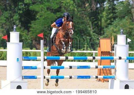 TAGANROG ROSTOV-ON-DON REGION AUGUST 6 2017: Competitions in equestrian sport devoted to the Day of Liberation of the Neklinovskiy district. Chestnut horse with rider is jumping over the white-blue barrier