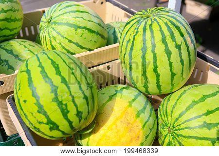 Fresh Organic watermelon for sale at Farmer's Market.