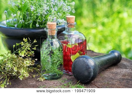 Mortar Of Healing Herbs, Bottles Of Herbal Tincture, Healthy Infusion And Medicinal Plants. Herbal M