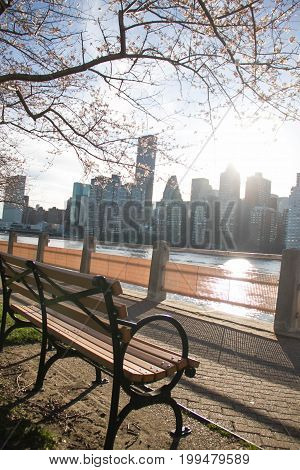 Park bench with cherry blossom branches at Roosevelt island next to east river and Manhattan in blurred background