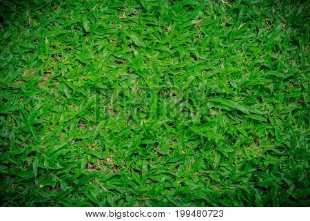 Natural background - green grass texture used for text input.