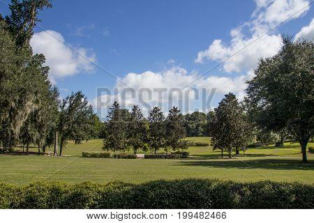ocala florida shalom park landscape oaks grass